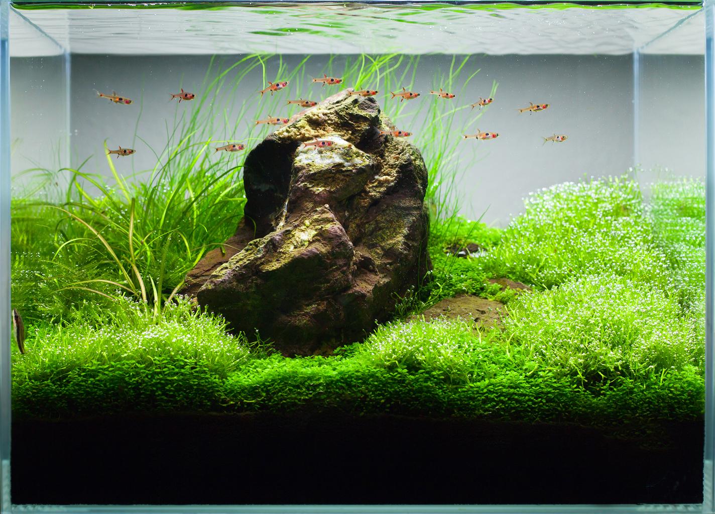 Secrets to successful iwagumi stone arrangement aquatic for Aquarium 10 litres